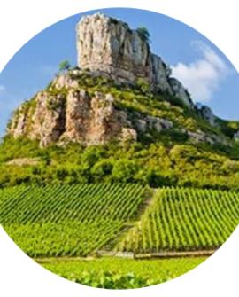 Bourgogne Corton
