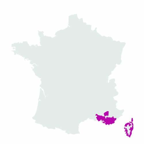 Provence - Corse
